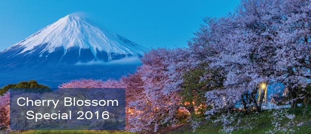 Cherry Blossom Special 2016