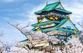 Splendors-of-Japan-Cherry-Blossom