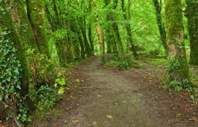 Killarney National Park NRI