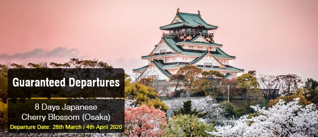 Japanese Cherry Blossom (Osaka)